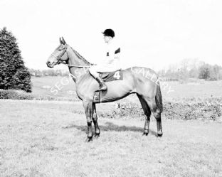 Arkle with Pat Taaffe (b478-01)